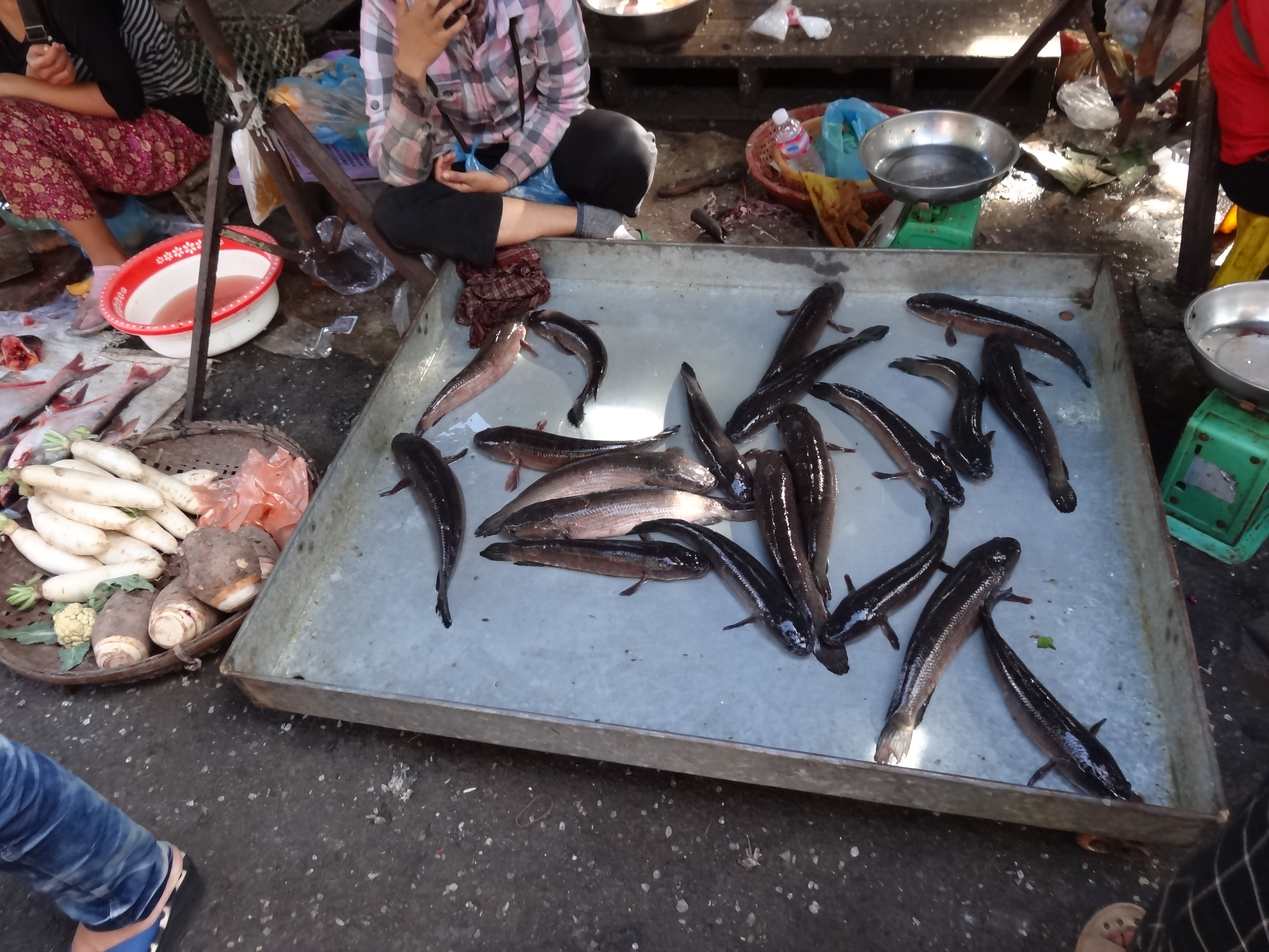 A slice of the lonestar state phnom penh cambodia for Live fish for sale